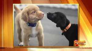 News video: Getting Your Puppy's Life Started on the Right Paw!