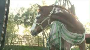 Officials Rescue Horse Trapped in Dumpster in Southern California [Video]