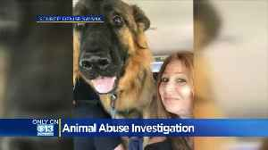 Family Speaks Out Against Dog Trainers Facing Animal Cruelty Charges After Death Of German Shepherd [Video]