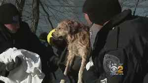Rescue Divers Save Dog From Freezing River [Video]
