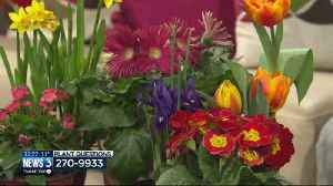 Lisa answers plant, gardening questions from viewers [Video]