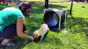 Downward Dog! Spa Retreat Offers Puppy Therapy to Help Guests Relax [Video]