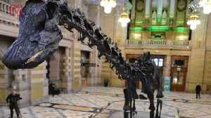A Massive Dino Named 'Dippy' is Going Up on Display in Scotland [Video]
