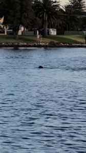 Dog and Dolphin Swim and Play Together [Video]