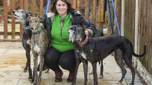 Animal lover has rescued more than 300 dogs from Chinese meat markets and brought them back to UK – but says ones she couldn� [Video]