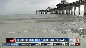 Impacts of red tide being felt again in Southwest Florida [Video]