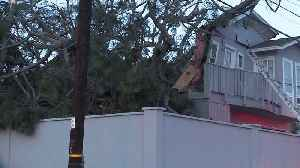Couple Vacationing in San Diego Killed When Tree Falls on Rental Home [Video]