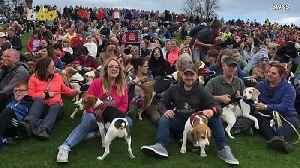 This Group of 1,029 Beagles Just Set a Guinness World Record [Video]
