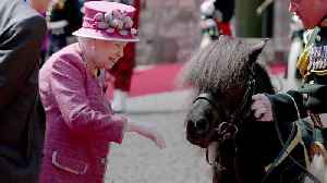 Watch Queen Elizabeth and Prince Harry with a Very Special, Very Prankish Shetland Pony [Video]