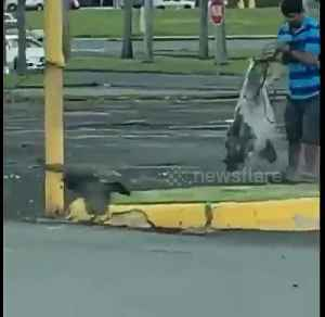 Shocking video shows man catching pigeons with net in Florida parking lot [Video]