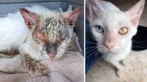 Neglected cat reveals beautiful eyes after dramatic transformation  [Video]