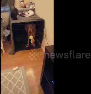 This woman has trained her dog with Harry Potter commands [Video]