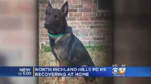 North Texas K-9 Home After Being Shot Last Week [Video]