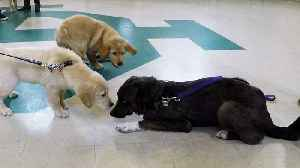 Rescued puppy makes adorable new friends at puppy school [Video]