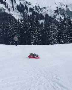 Bulldog Spins on Sled Down Hill [Video]