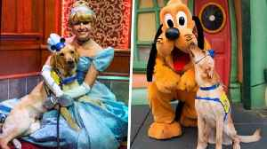 Service Dog-in-Training Embraces Cinderella at Disneyland [Video]