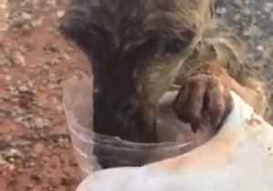 Heat-Stressed Joey Rescued by Aussie Farmer as Drought Continues [Video]