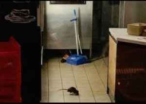 Sydney Fast Food Restaurant Closes After Rats Spotted [Video]