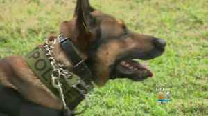 Miami Beach Police To Select K9 Officer [Video]
