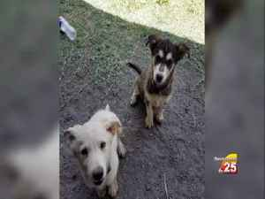 Bloomington family seeks justice for pet [Video]