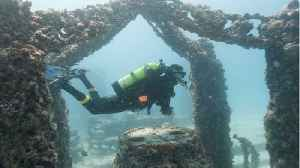 Coral Reefs Can Survive If Humans Stay Away [Video]