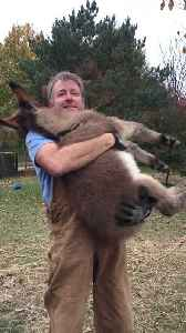 Watch This Man Preciously Cuddles A Foal In His Arms! [Video]