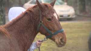 33 Horses Seized from Virginia Woman with Criminal History of Animal Cruelty [Video]