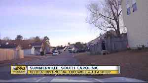 Officer has unusual exchange with a sheep in Summerville, South Carolina [Video]