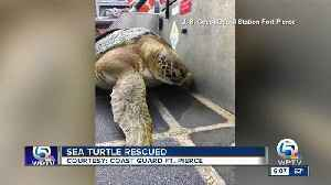 Sea turtle rescued near Fort Pierce [Video]