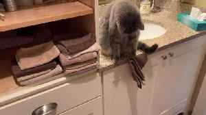 Cat Throws Stack of Hand Towels on the Floor [Video]