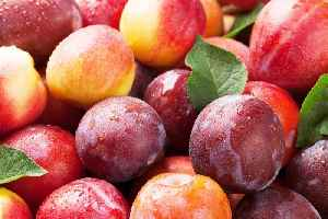 Peaches, Plums, and Nectarines Recalled Nationwide Due to Listeria Concerns [Video]