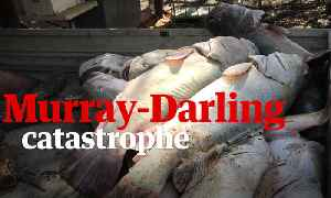 What caused the death of a million fish in Australia's Murray-Darling Basin? – video [Video]