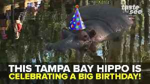 Lu the Hippo celebrates 59th birthday | Taste and See Tampa Bay [Video]