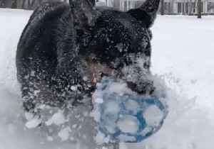 Otto the Dog Plays in Buffalo Snow as Winter Storm Approaches [Video]