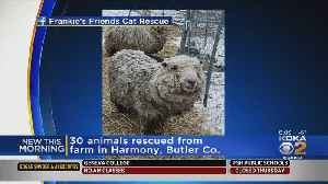 30 Neglected Animals Rescued From Butler Co. Farm [Video]