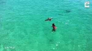 Sealed with a splash! Unlikely playmates have a swim as seal floats next to girl [Video]