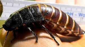Study Shows Common Type Of Roach Killer Is Destined To Bomb [Video]