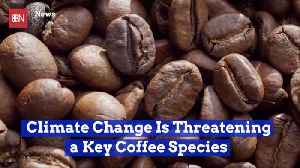 Climate Change Is Threatening This Type Of Coffee [Video]