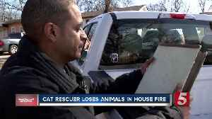 Cat rescuer loses home, rescued animals after devastating fire [Video]