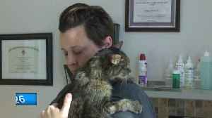 De Pere man says he saved a dog from a cold car [Video]