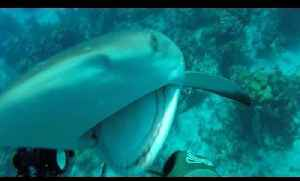 Man Gets Attacked by Shark While Spear Fishing Underwater [Video]