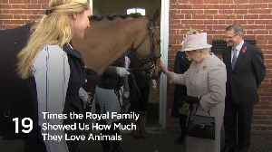 19 Times the royals showed us how much they love animals [Video]