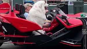 Totally Chill Dog Goes For Ride In Exotic Super Car [Video]