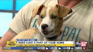 Pet of the week: Luke is a super sweet months-old hound mix who needs a family of his own [Video]