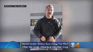 Police Looking For Owner Of Dogs That Attacked Another Dog [Video]