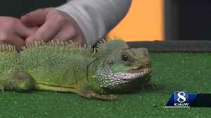 Pet of the Weekend: Puff [Video]