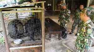 Touching moment gardener releases bear cub he rescued and hand-reared for two years [Video]
