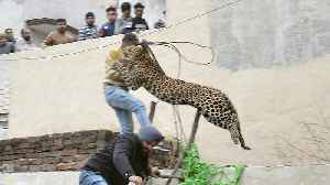 Panicked Leopard Injures At Least 4 People in Indian Village [Video]