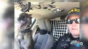 Tucson Police's K9 Bolt is ready to retire after 5 1/2 years of hard work [Video]