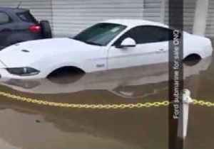 'Not The Mustangs': Prized Cars Damaged in Townsville Floods [Video]
